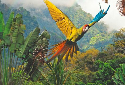 Vogel in Costa Rica