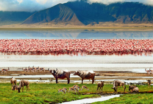 Safari Ngorokrater inTansania Afrika